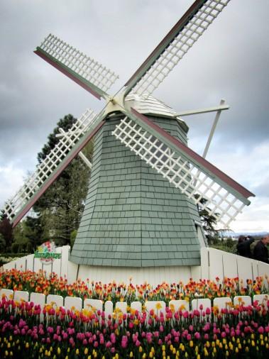 Skagit Valley Tulip Festival 109