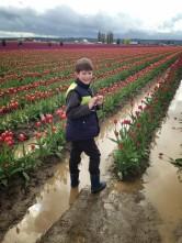 Skagit Valley Tulip Festival 21