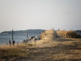 Path to the beach on Orcas Island, WA.