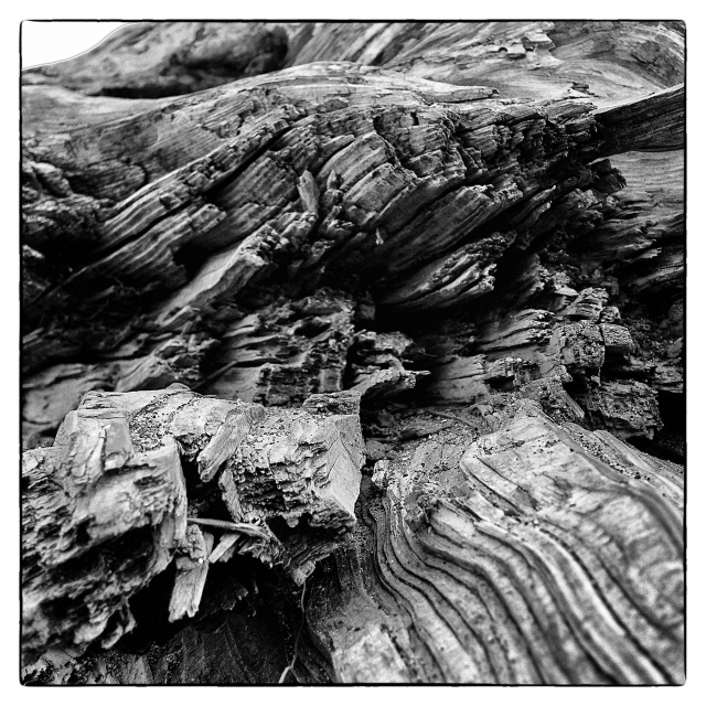 B&W Beach Log
