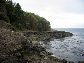 Curved Coastline on San Juan Island