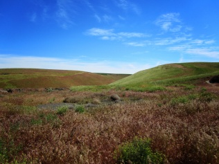 Curved landscape in Eastern Washington