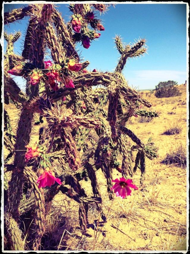 Flower Friday 7-19-13