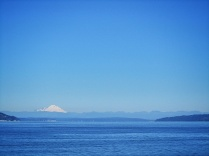 Where the Orcas were with Mt. Baker in the background.