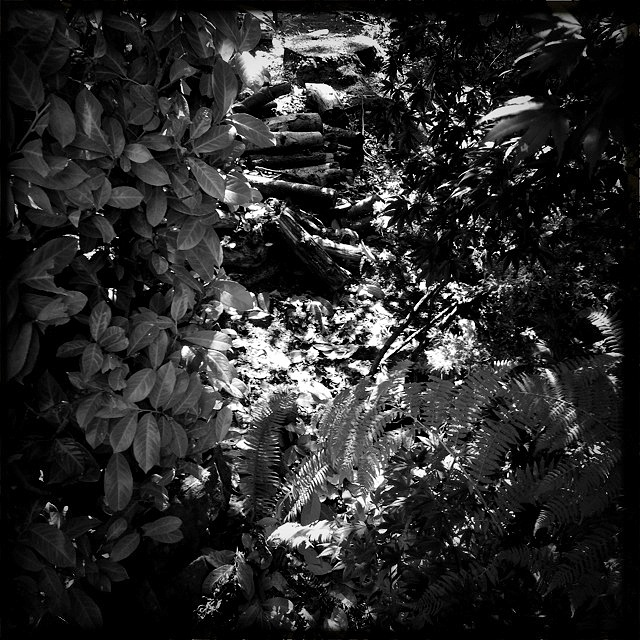 Phoneography Monday 2 8-5-13