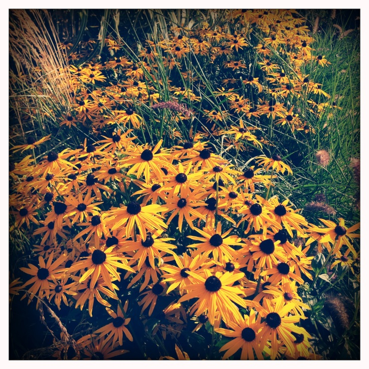 Phoneography Monday 9-2-13