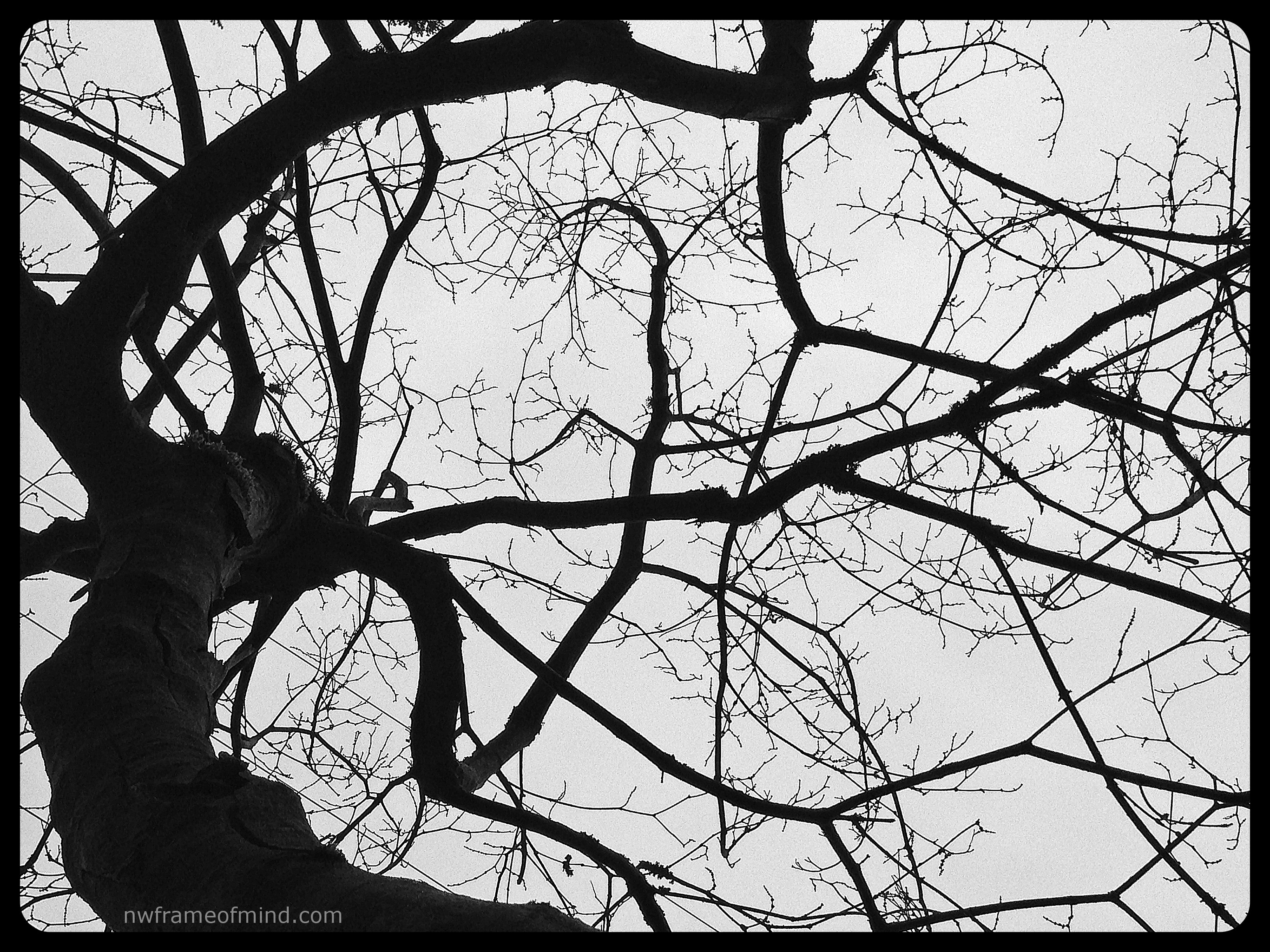 Displaying 19> Images For - Tree Branch Silhouette...