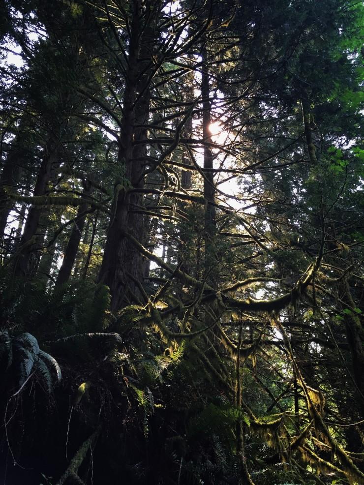 iPhone Wednesday 7-8 Nature