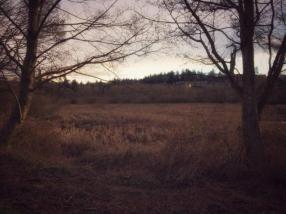 2-28 Snapseed