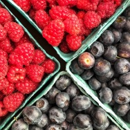 Fresh picked berries in Oregon