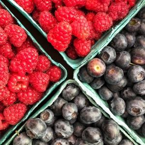 Fresh picked berries in Oregon