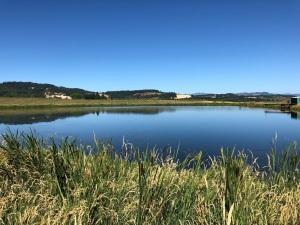 Blue pond at an Oregon farm.