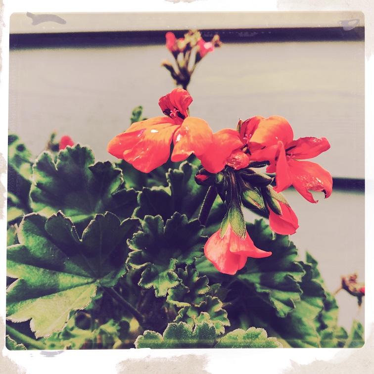 Winter garden in the PNW