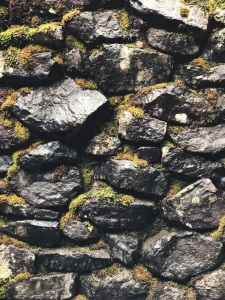 Moss on a rock wall