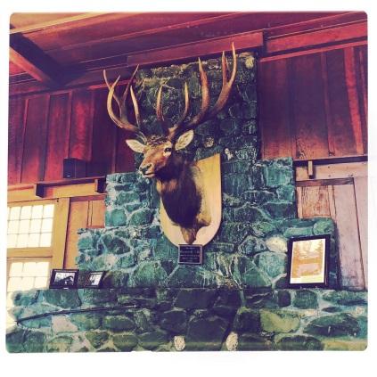 Roosevelt Elk at Lake Crescent Lodge